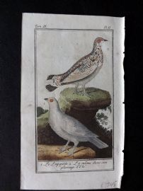 Buffon 1785 Antque Hand Colored Bird Print. Lagopus 3-6